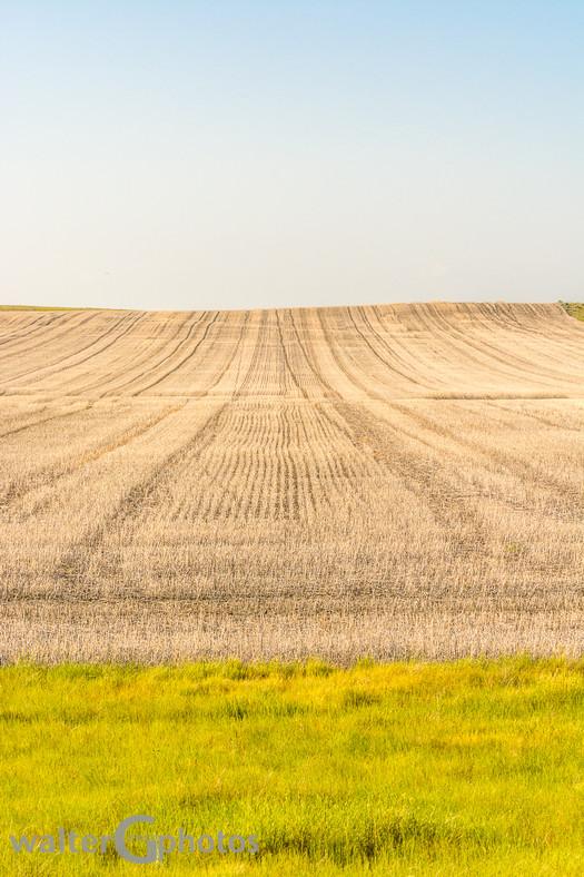 Saskatchewan Cropland