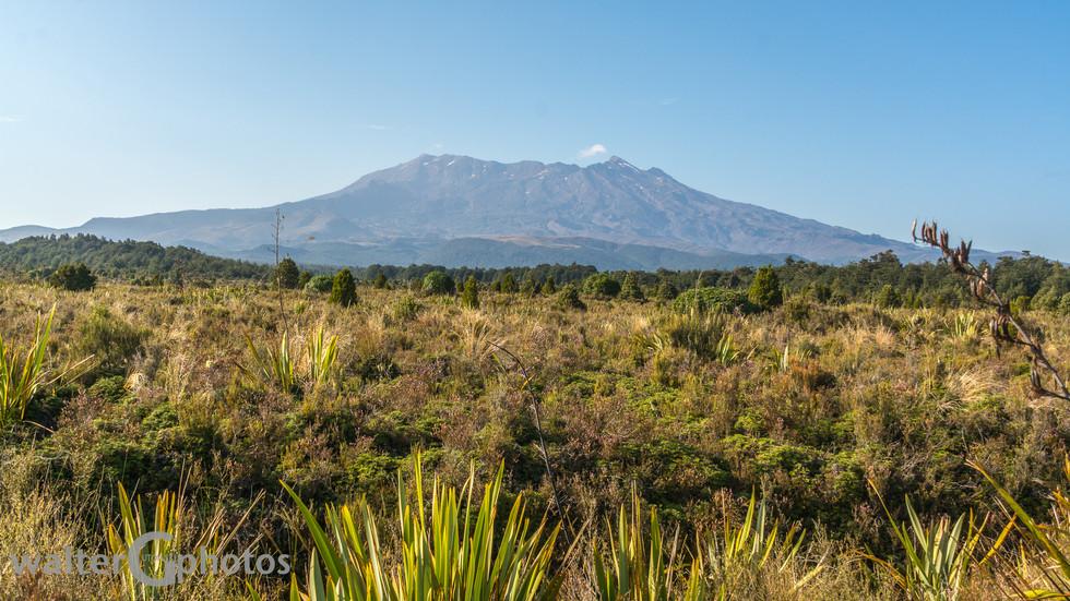 Landscape at Hauhungatahi (volcano)
