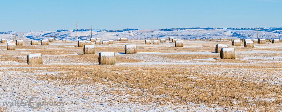 Alberta Hay Field