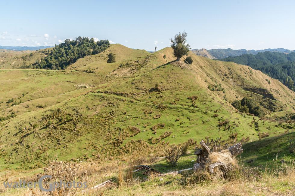 Landscape on Parapara Road