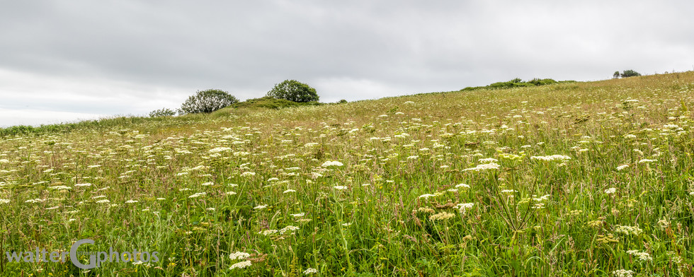 Field in Falmouth, Cornwall, England