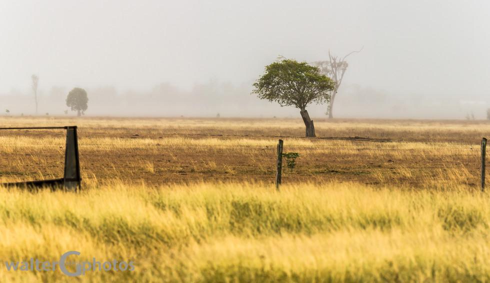 Landscape north of Rockhampton