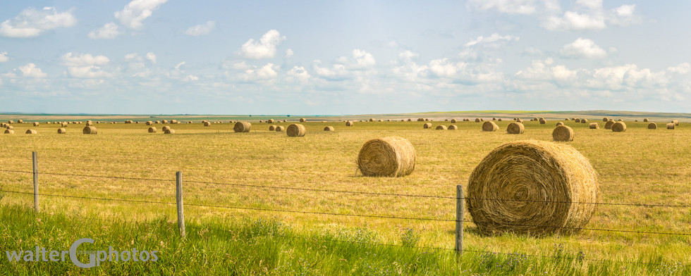 Saskatchewan Hay Bales