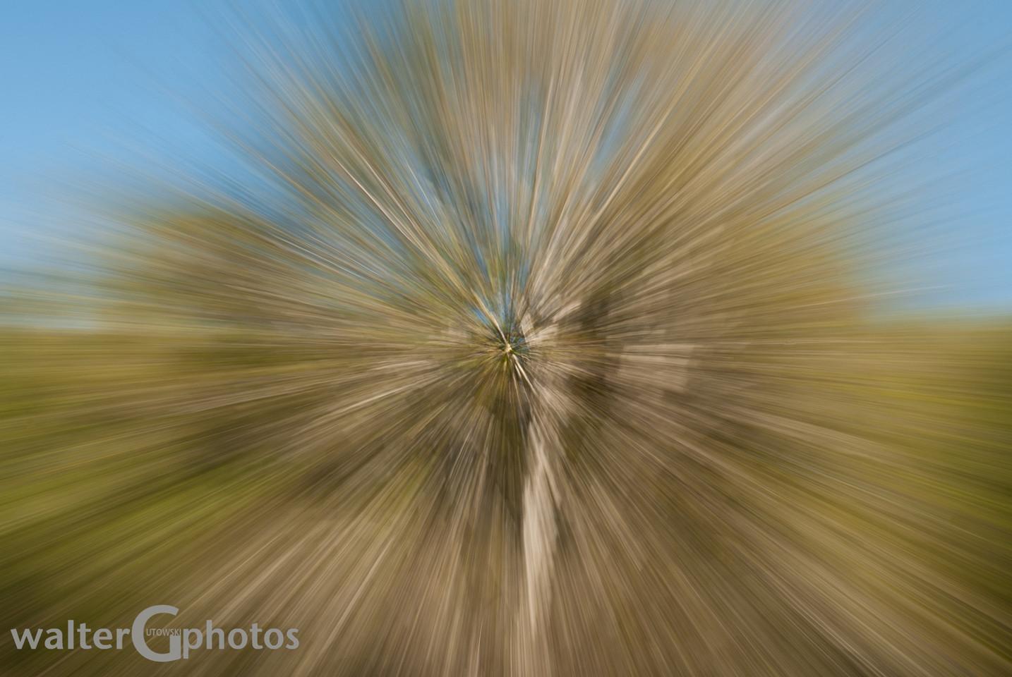 Tree Zoom