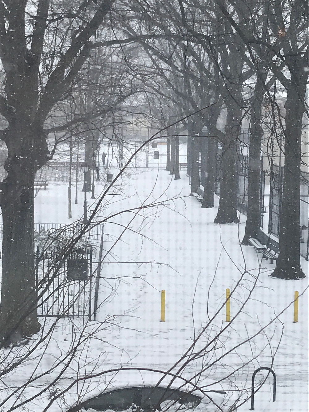 Winter view of St John's park , Brooklyn NY