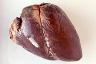 Liver, Heart, Tongue, Kidney