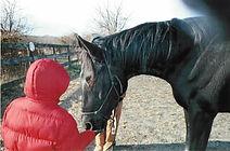 """Team Velvet Therapy Horse """"Velvet"""""""