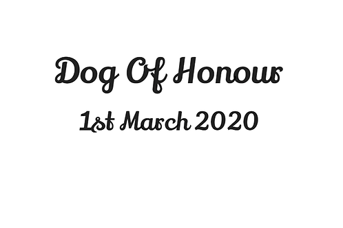 'Dog of Honour' and Date Bandana - Add On