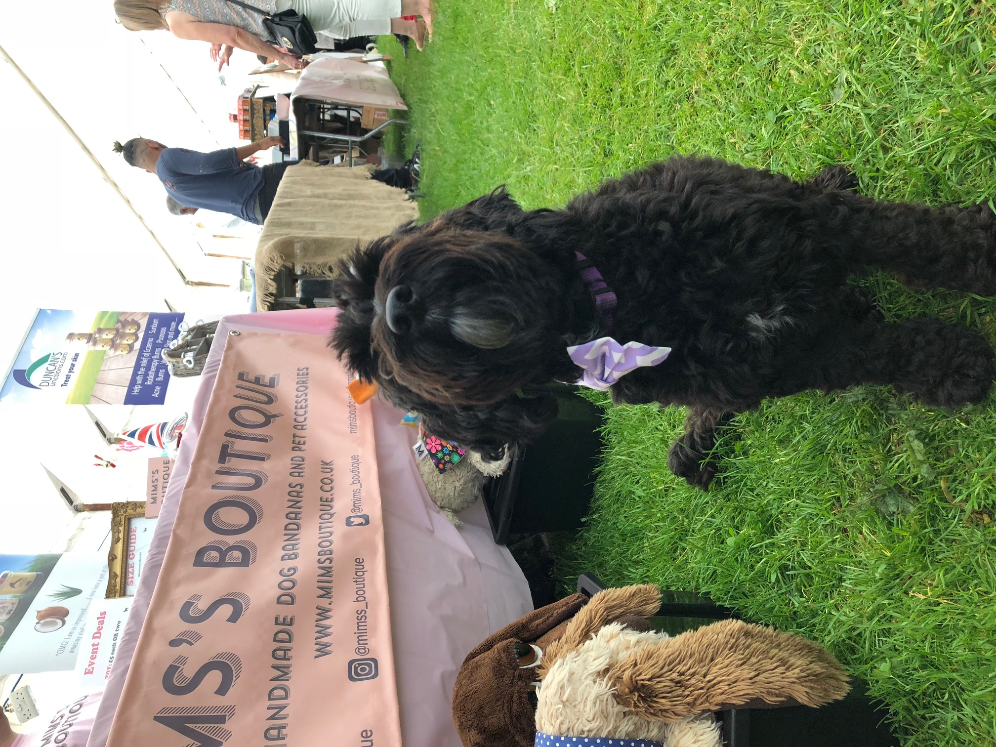 Hastings Town and Country Fair 2018