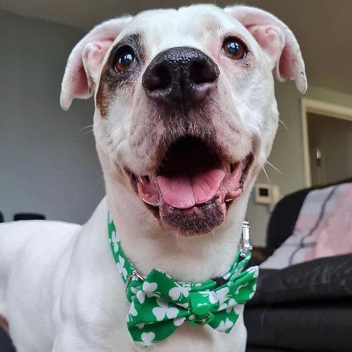 Lucky Charm (Collar)
