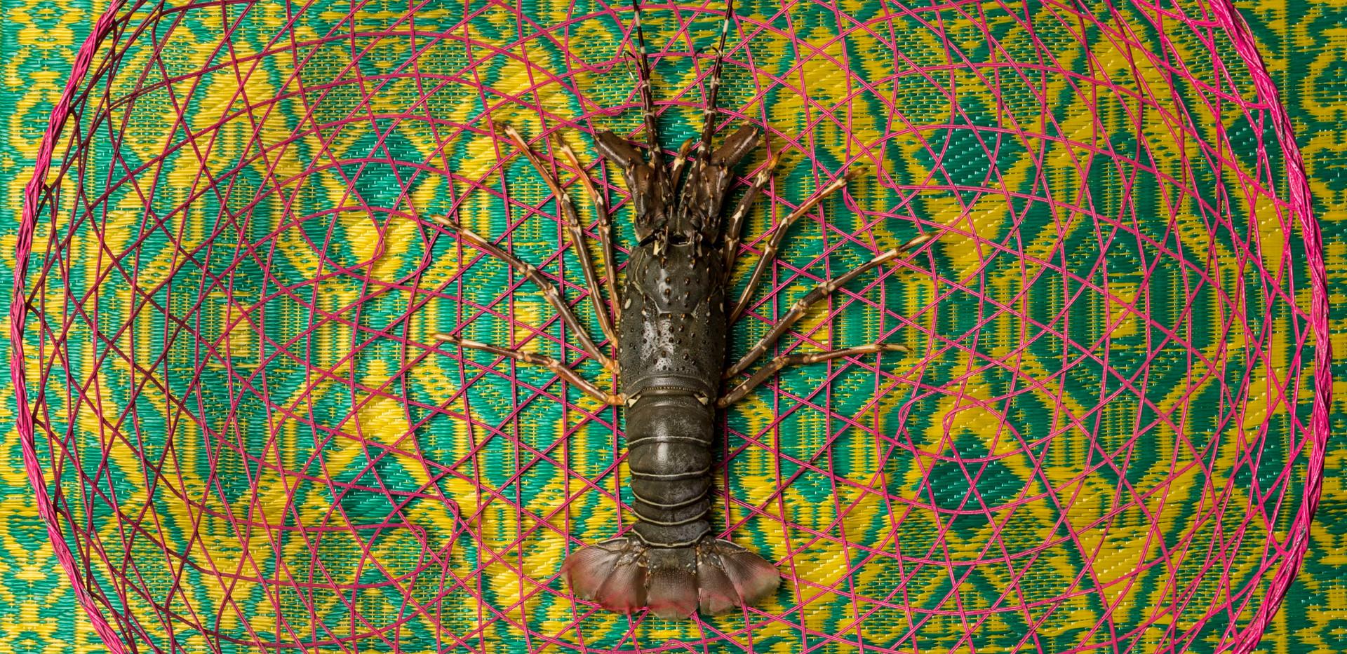 UAE Lobster
