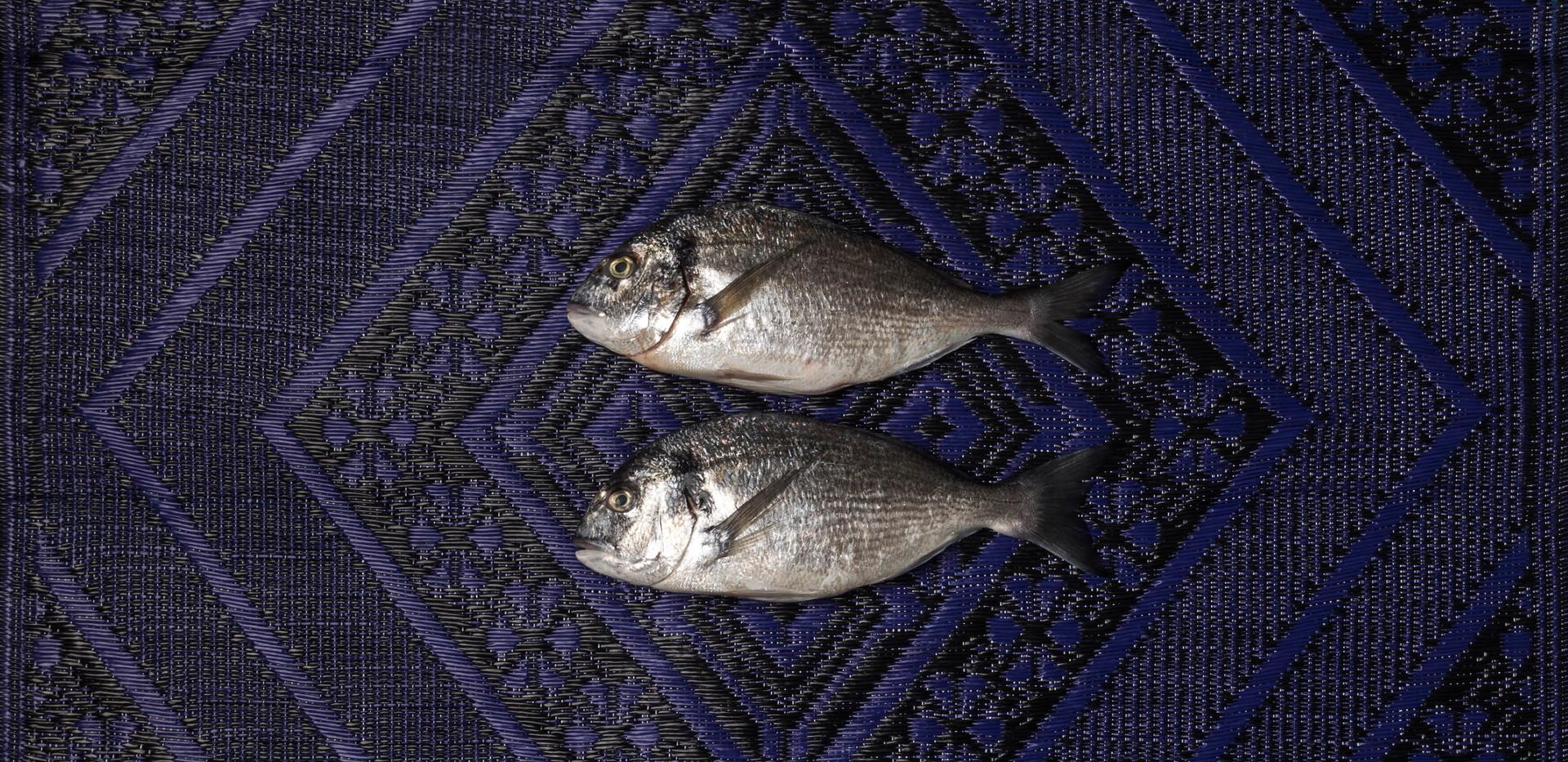 Fish & Midnight Blue