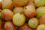 gooseberry-3480623_1920.jpg