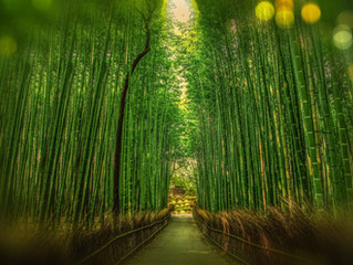 Why Use Bamboo as Materials for Products?