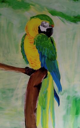 Papagei-Ara Grün
