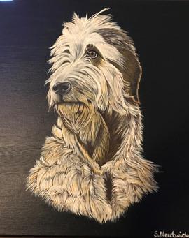 Portrait%20irischer%20Wolfshund_edited.j