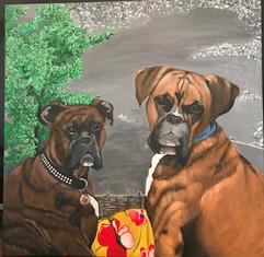 2 Boxer
