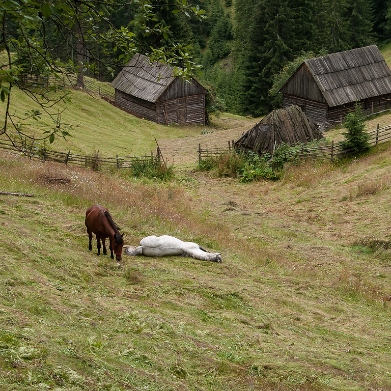 Conference on new farm architecture in Transylvania.