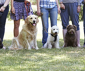 Group Of Dogs With Owners At Obedience C