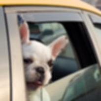 Passenger of a taxi.jpg