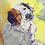 Thumbnail: Dog Portraits