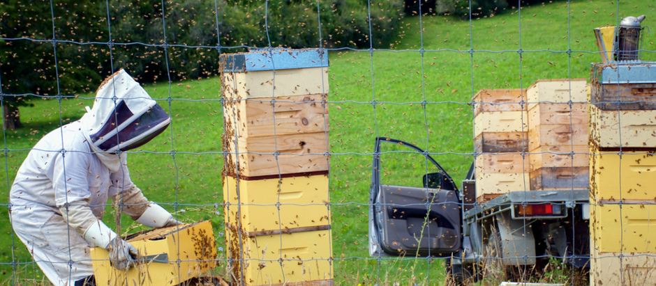 Bee Safe! How we're tackling hive thefts...