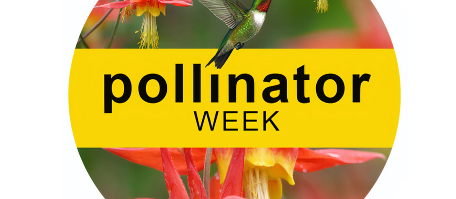 Power in Pollinators week is right around the corner!