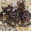 Thumbnail: Wildcrafted Jamaican Purple Sea Moss