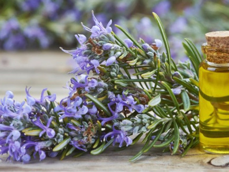 14 Benefits & Uses of Rosemary Essential Oil