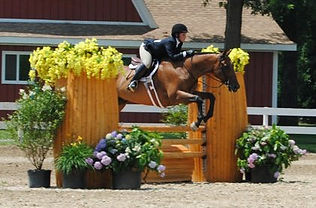 We offer showing opportunities at local rated & schooling shows.  We offer professional services at affordable prices.