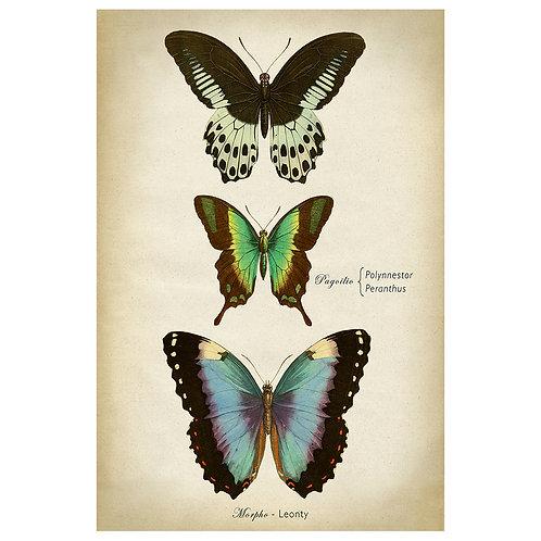 ButterfliesBluevignette 40x60cm - fine print