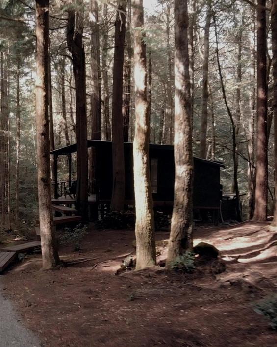ELK FOREST TEASER 2.mp4
