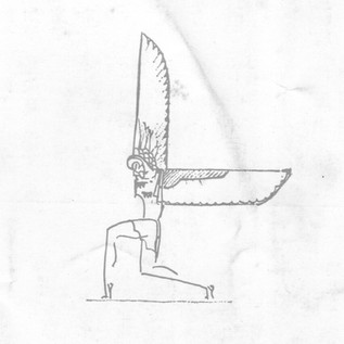 Drawing of Hawk