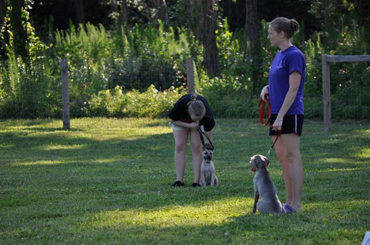 Gloucester Kennel Club~Puppy Obedience Class~June 2012