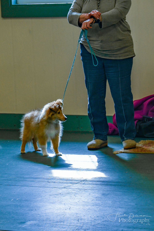 Puppy Kindergarten Class