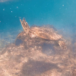 Made friends with honu in Hawaii