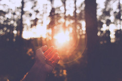 forest-hand-light-photography-sun-favim-com-415834