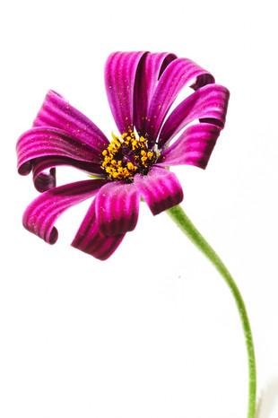 20140526_flower14300.jpg