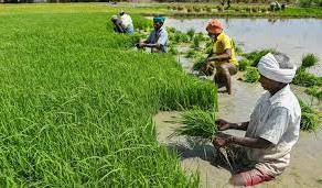 Center approves hike in MSP for Kharif Crops in 2021-22.