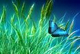 grass-1058118__340 vlinder tussen gras.w