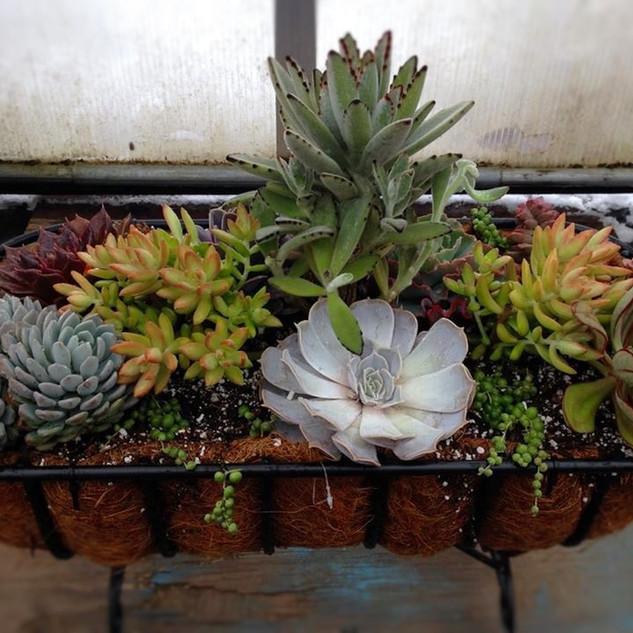 Crattle planter
