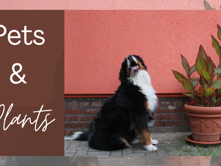 Are Plants Safe for Pets?