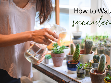 Guide to Watering Succulents...