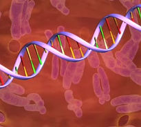 Misspellings on the DNA helix can lead to disease.