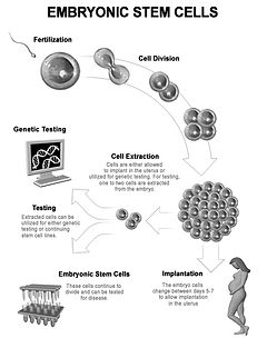 3d stem cells,stem cells, embryonic stem cells
