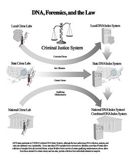 3d DNA, 3d forensics