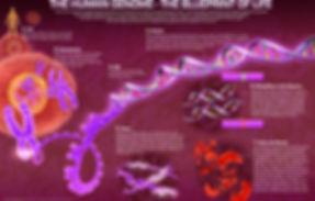 3d GPPC, genome, DNA, cell, chromosome, GPPC, Blueprint of Life