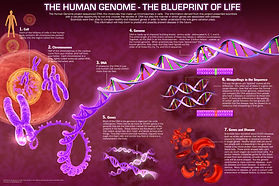 3d GPPC, genome, DNA, cell, chromosome, GPPC, Blueprint of Life