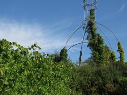 Größter Bocksbeutel in Stammheim