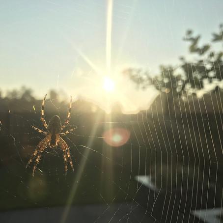Spinnenangst?